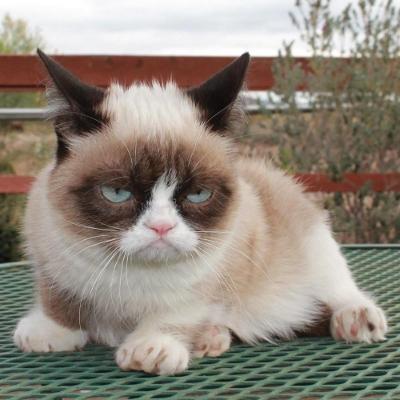 Tard-Grumpy-Cat.jpg