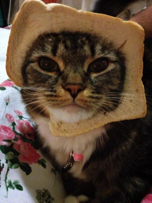breadcats