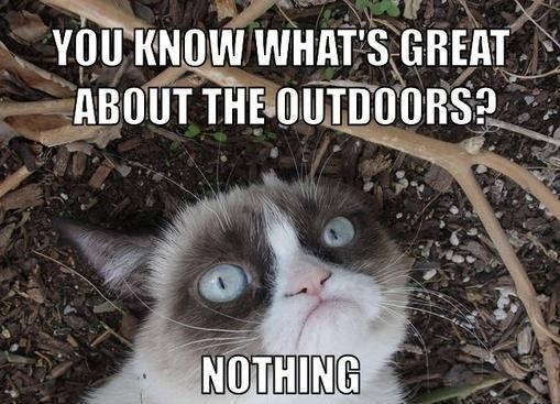 Grumpy Cat Meme Outdoors