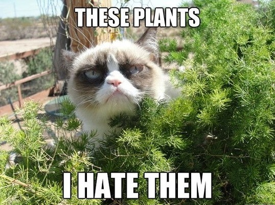grumpy cat hating the plants