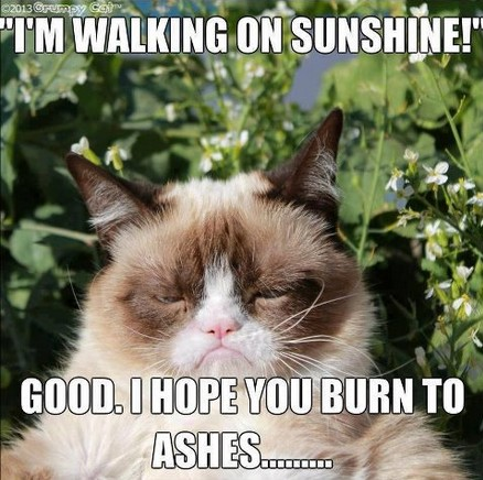grumpy-cat-sunshine
